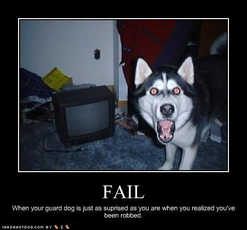 funny-dog-pictures-surprised-robbed